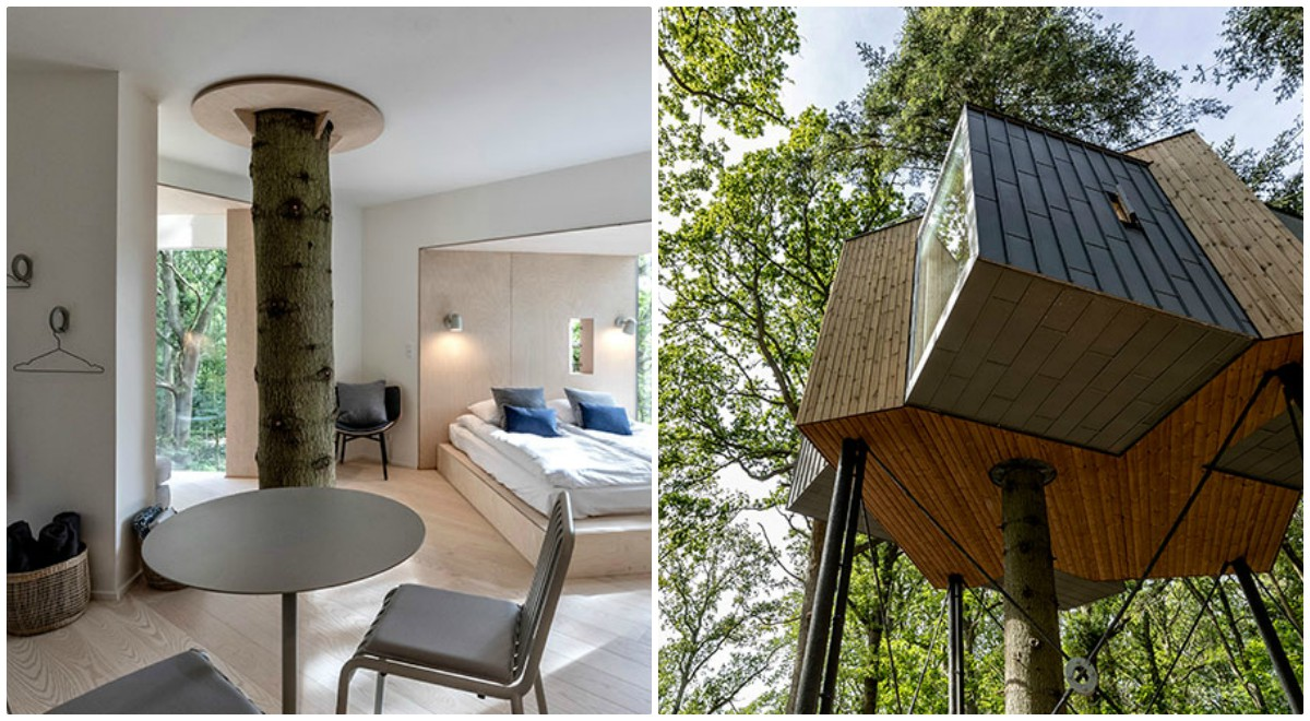 Cabana Lovtag, casa de vacanta construita intr-un copac
