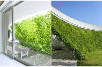 Casa cu perete verde, mai racoare cu 10 grade