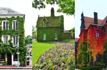 Fatade de case acoperite cu vegetatie: 26 de imagini spectaculoase