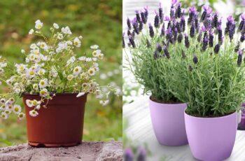 Plante de interior care te vor ajuta in ameliorarea stresului